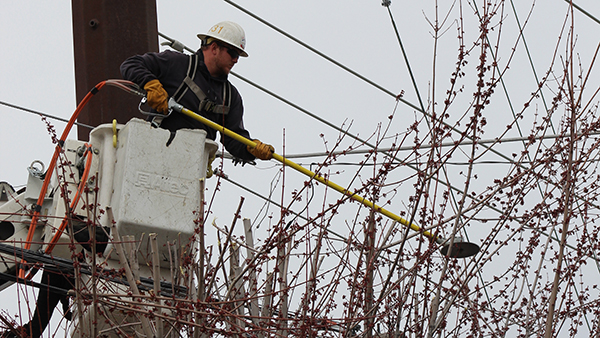 Tree Trimming for Safety and Reliable Power